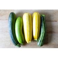 Секреты выращивания кабачков